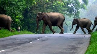 Download Elephants Cross The Road | Lands of the Monsoon | BBC Video