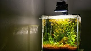 Download Low tech planted Aquarium   SECRET Revealed to have GREAT planted tank Video