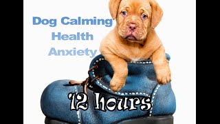 Download Dog Calming 12 hours of relaxing Music for your Dog (Tested) Video