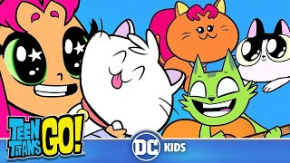 Download Teen Titans Go! | A Funny Cat Video | DC Kids Video