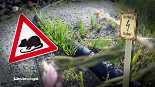 Download Bewachter Bahnübergang - Hammer der Woche vom 27.05.2017 | ZDF Video