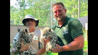 Download Animal Adventures with Jordan: Snow Leopard Video