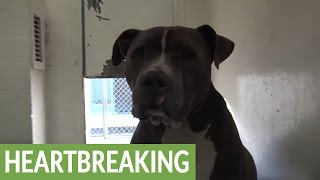 Download Dog given up to animal shelter cries tears of sadness Video