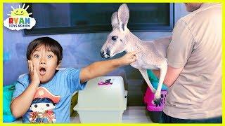 Download Meet Ryan's New Pet Kangaroo!!!! Video