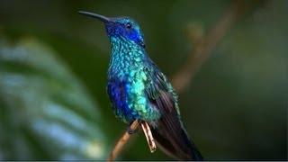 Download Kolibri - virtuose Flugkünste Video