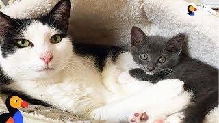 Download Cat Learns To Open Door To Meet New Foster Kittens - POKEY | The Dodo Video