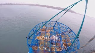 Download how to catch crab off a dock part 1 Video