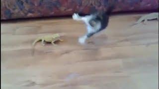 Download 【大笑】物凄い勢いでビックリする猫ちゃん、他(猫 おもしろ動画) Goofy cats Video
