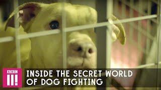 Download Professor Green | Inside The Secret World Of Dog Fighting Video
