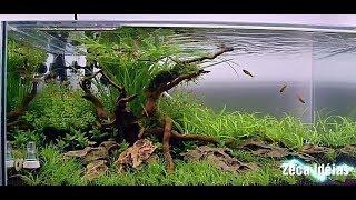 Download Idéia Incrível - Jardim Submerso em Aquário Video