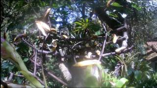 Download Nido de Picaflor - Nest of hummingbird Video