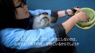 Download ひらり君のレッスン風景・伊勢シーパラダイス Video