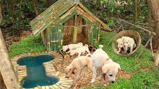 Download Build Mini Swimming Pool For Dogs And Build Bamboo Dogs House Video