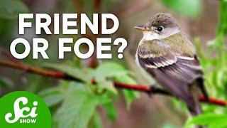 Download 6 Surprisingly Helpful Invasive Species Video