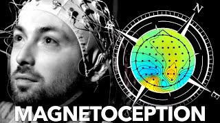 Download Can Humans Sense Magnetic Fields? Video