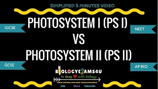 Download What are Photosystems? Difference between Photosystem I and Photosystem II (PS I vs PS II) Video