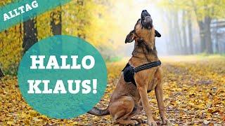Download Neues Familienmitglied. Hallo Klaus! Tricks & Wesen | Boxer Schäferhund | Hundekanal Video