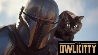 Download If Baby Yoda was a Cat (Mandalorian + OwlKitty) Video