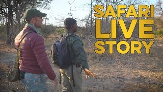 Download How to approach a lioness on foot at a suspected den site Video