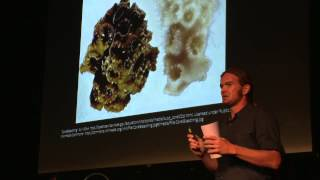 Download Fixing Paradise: Rethinking Sustainable Agriculture for Food-Desert | Nate Olive | TEDxSaintThomas Video