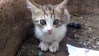 Download Müthiş tatlı yavru kedi hem açtı hemde annesinin sevgisini arıyordu.Doydu ve sonra annesine kavuştu. Video