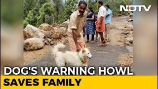 Download How A Dog Saved A Kerala Family From Devastating Landslide Video
