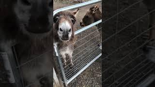 Download Goodnight Lulu, Goodnight Fanny. Donkey Tricks Video