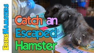 Download CATCH AN ESCAPED HAMSTER | Bucket Trap Tutorial Video