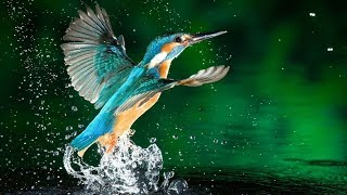 Download Wildlife Nature of Thailand - National Geographic Documentary HD Video
