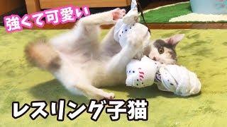 Download タオル相手にプロレスごっこをする子猫 Video