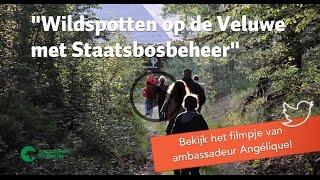 Download Wildspotten op de Veluwe met Staatsbosbeheer Video