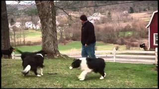 Download Meet The Dogs of Bedlam Farm by Jon Katz Video