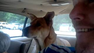 Download Dog FREAKS when she realizes she's going to Vet!!! Video
