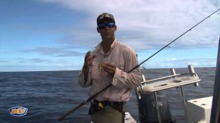 Download How to catch Snapper - Fishing - BCF Video