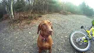 Download Downhill mountain biking at The Lookout (Swinley Forest) with Amber the Downhill Dog filmed on GoPro Video