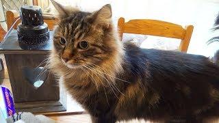 Download Meet Ori (My Cat) Video