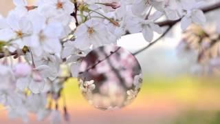Download Переходы Organic For ProShow Produce Video