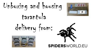 Download unboxing and housing spiderworld.eu tarantula delivery to UK Video