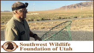 Download In Search of a Hawk and a Great Horned Owl Video