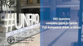 Download FAO launches complete guide to tackle Fall Armyworm (FAW) in Africa Video