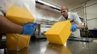 Download American Farmers Dealing With Cheese Glut Video