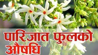 Download Important of Parijat Flower Video
