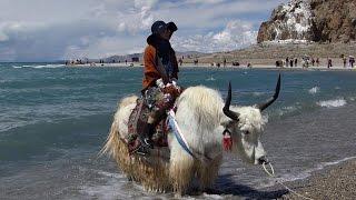 Download 美麗西藏十日遊 Video