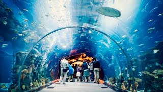 Download Dubai Mall World Largest Shopping Mall Indoor Outdoor Aquarium Fountain Amazing Show. Video