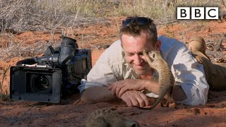 Download Magic meerkat moments - Planet Earth Live - BBC One Video