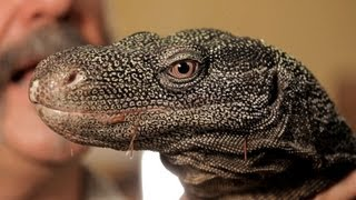 Download 5 Cool Facts about Monitor Lizards | Pet Reptiles Video