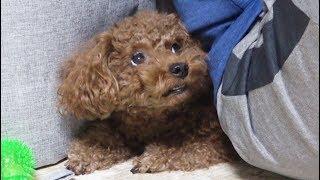 Download 황당한 일 겪은 강아지 Video