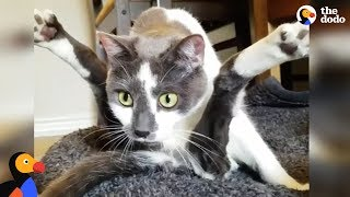 Download Special Cat Turns Guy Who Hated Cat into The Ultimate Cat Dad - SCOOTER | The Dodo Video