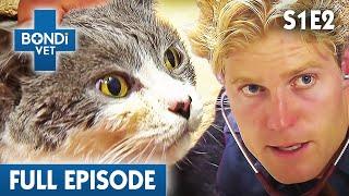 Download 🐱 Cat Left In Bondi Beach | S01E02 | Bondi Vet Video