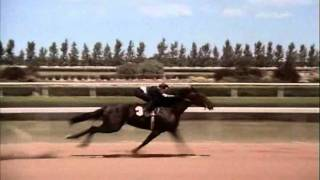 Download The Black Stallion Race Rescored Whit Return To Snowy River Music Video